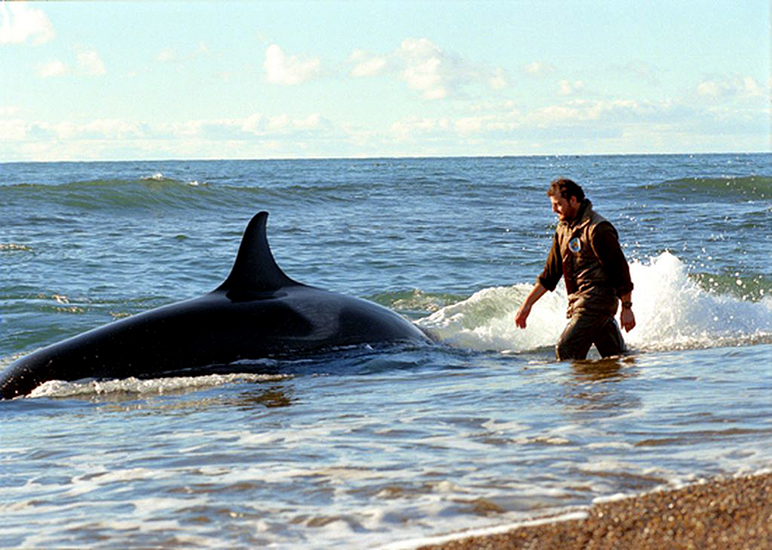 O injustiçado encantador de orcas selvagens