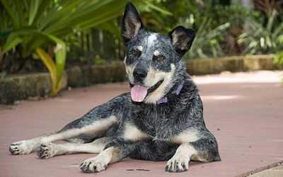 Náufraga de quatro patas: a cadela que viveu meses numa ilha deserta